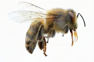 29 Sept bee 02
