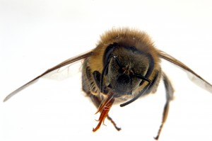 29 Sept bee 09