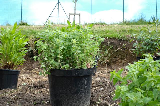 planting_1_may2017