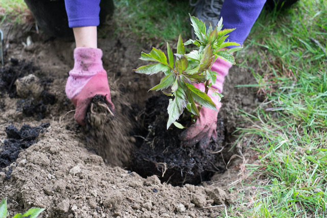 planting_2_may2017