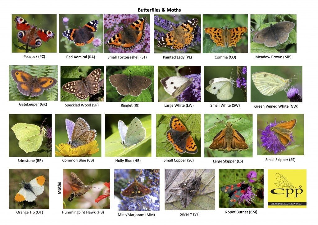 CPP Butterfly and Moth ID Guide