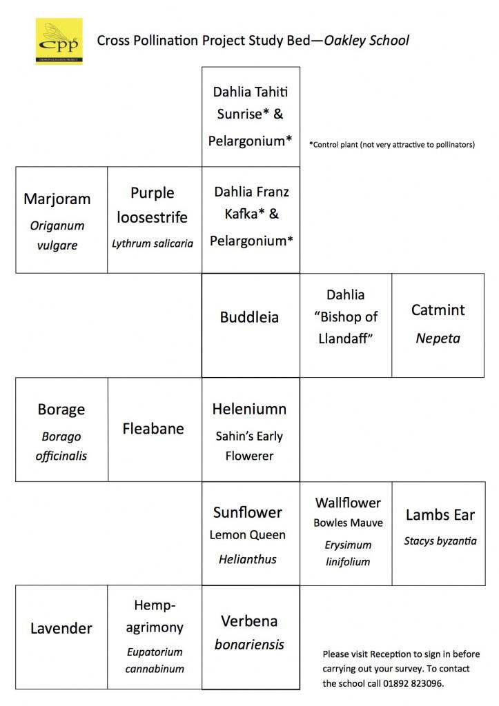 Oakley Bed Map