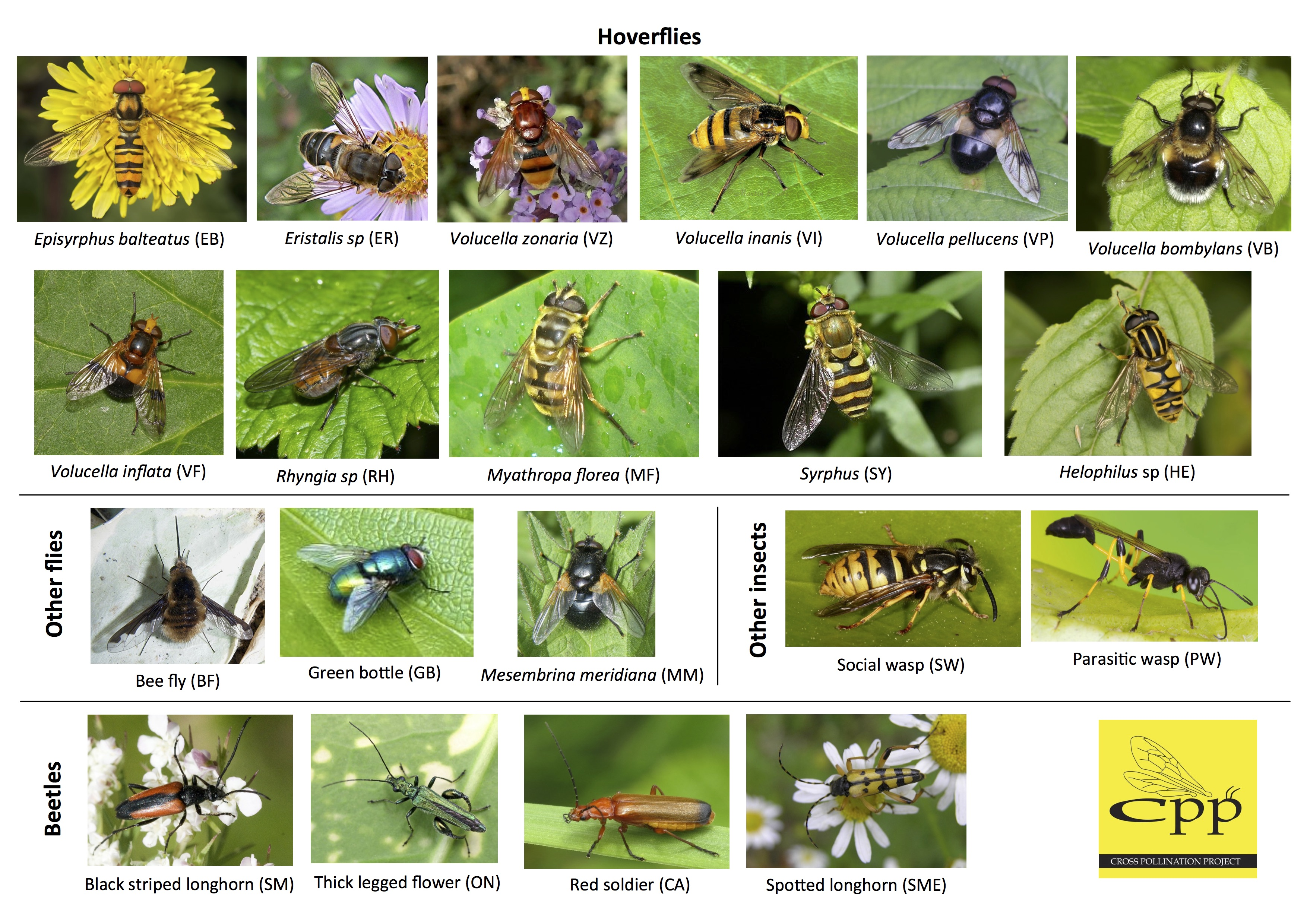 Insect Identification Chart Entomology Garden Insects Art Print